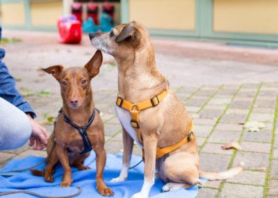 Hunde Erna & Sola Mia