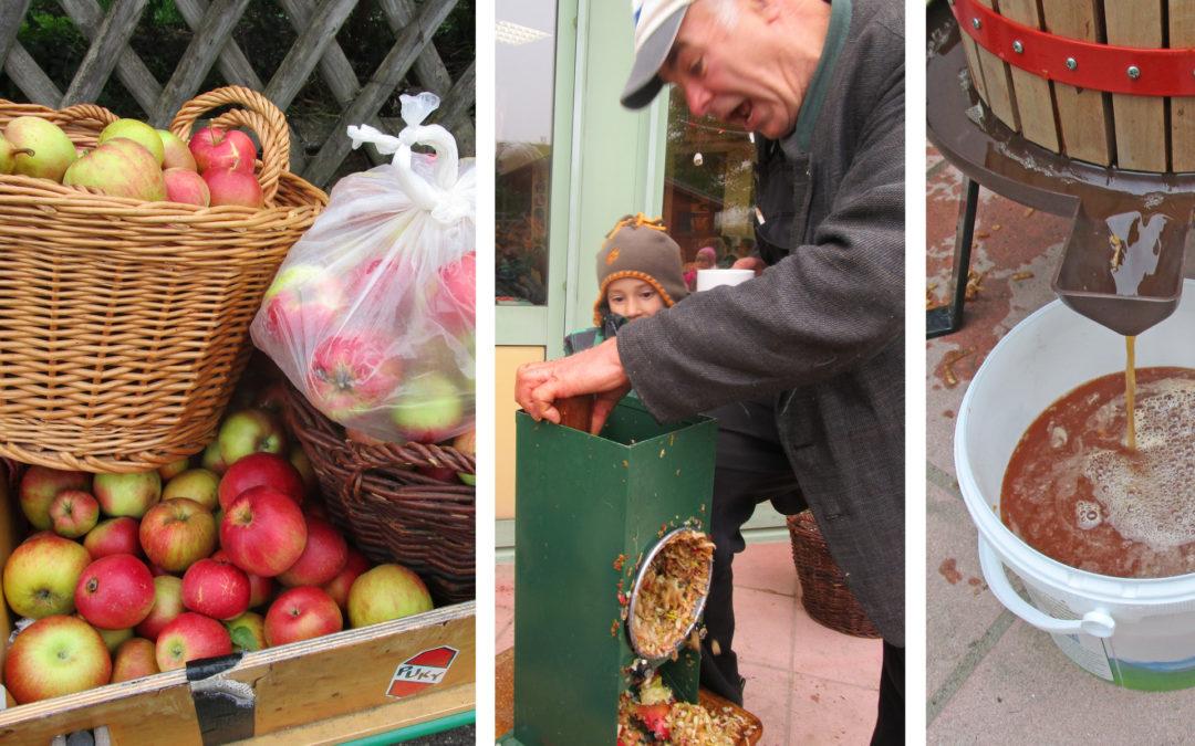 Apfelernte im Kindergarten